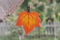 Ahornblatt klein orange, mit Aufhänger