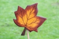 Ahornblatt groß braun, mit Stock
