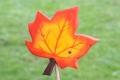 Ahornblatt groß orange, mit Stock