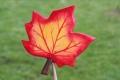 Ahornblatt groß hellrot, mit Stock