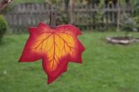 Ahornblatt groß dunkelrot, mit Aufhänger
