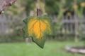 Ahornblatt klein grün, mit Aufhänger